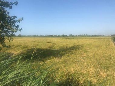 فروش زمین کشاورزی در محمودآباد