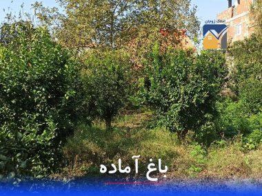فروش باغ آماده در محمودآباد